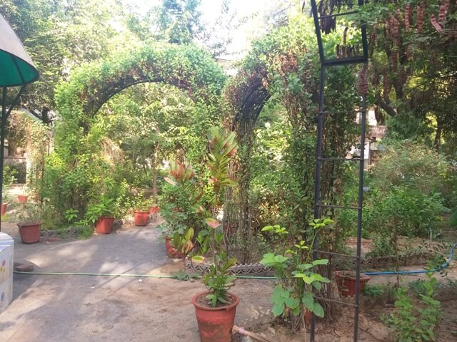Herbal Garden